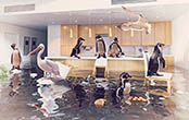 penguins in flooded kitchen